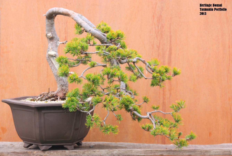 bonsai-heritage-3