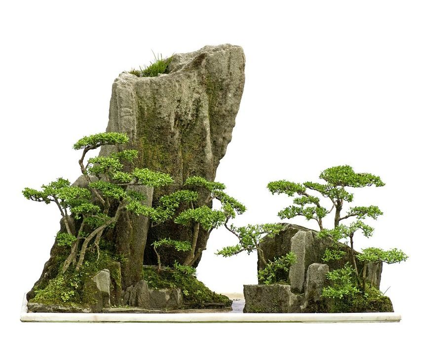 landera_bonsai_blog