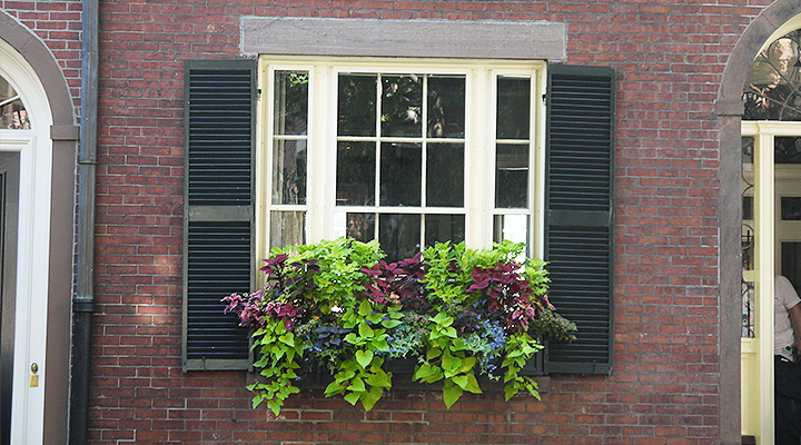 window-box-acorn-street
