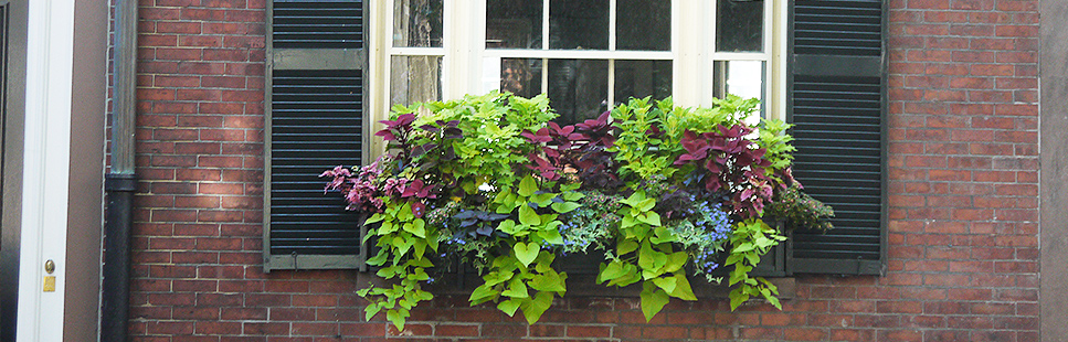 window-boxes-boston