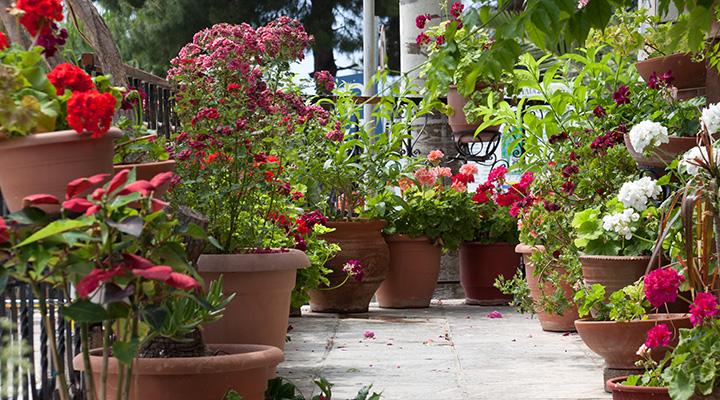 Landera Balcony Gardens Oct1